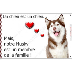 "Husky Marron, plaque ""Membre de la Famille""  20 cm LOV"
