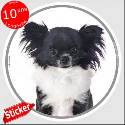 """Chihuahua noir et blanc poils longs, sticker autocollant rond """"photo"""" 15 cm intérieur/Extérieur adhésif"""