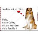 """Colley Fauve, plaque """"Membre de la Famille"""" 16 cm LOVE A"""