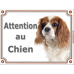 "Cavalier King Charles Blenheim Tête, plaque ""Attention au Chien"" 2 tailles LUXE A"