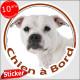 "Staffie blanc, sticker autocollant rond ""Chien à Bord"", adhésif voiture Staffordshire Bull Terrier Staffy adhésif photo chien"