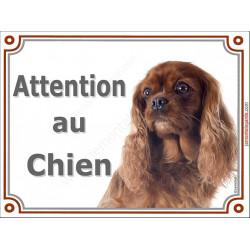 Plaque portail 2 tailles Attention au Chien, Cavalier King Charles Rouge Rubis Tête pancarte panneau marron