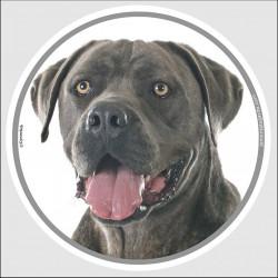 """Cane Corso Italiano gris bleu, sticker autocollant rond """"photo"""" 15 cm intérieur/Extérieur adhésif chien résistant"""