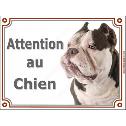 "American Bully bicolore Tête, plaque portail ""Attention au Chien""  2 tailles LUX A"