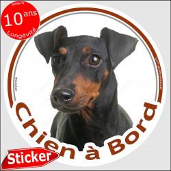 """Manchester Terrier, sticker autocollant rond """"Chien à Bord"""" disque adhésif vitre voiture pinscher moyen photo"""