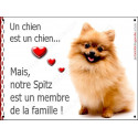 """Spitz Roux Assis, plaque """"Membre de la Famille"""" 24 cm LOVE"""