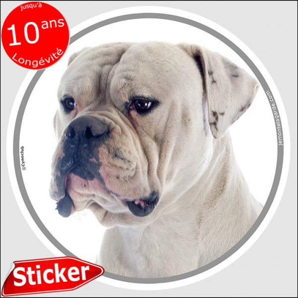 """Bouledogue Américain blanc, sticker autocollant rond """"photo"""" 15 cm intérieur/Extérieur voiture Bulldog USA adhésif"""