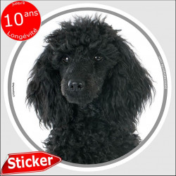 "Caniche noir, sticker ""photo"" 15 cm"