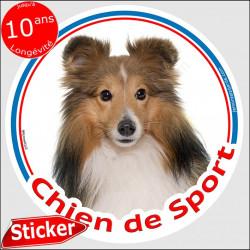 """Sticker rond """"Chien de Sport"""" 15 cm, Berger Shetland fauve Tête, intérieur/Extérieur sheltie Adhésif agility club photo"""