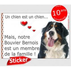 """Bouvier Bernois Tête, sticker autocollant """"Love"""" 16 x 11 cm, intérieur/Extérieur"""