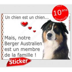 """Berger Australien tricolore noir Tête, sticker autocollant """"Love"""" intérieur/Extérieur Aussie photo chien membre famille"""