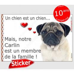 """Carlin fauve beige sable, sticker autocollant """"membre de la famille"""" adhésif coeur idée cadeau chien"""