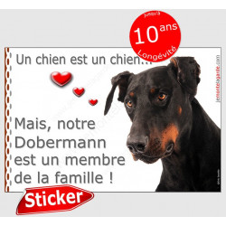 "Dobermann Tête, sticker ""Love"" 16 x 11 cm"