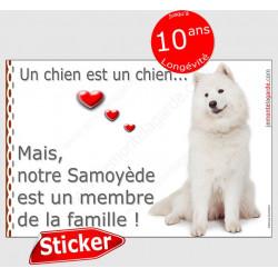 """Samoyède assis, sticker autocollant """"Love"""" 16 x 11 cm, intérieur/Extérieur adhésif voiture photo chien"""