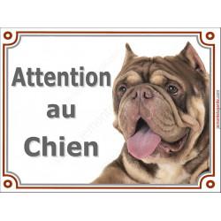 Plaque portail Attention au Chien, American Bully chocolat marron dilué Tête pancarte panneau oreilles coupées photo