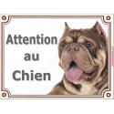"""American Bully marron dilué Tête, plaque portail """"Attention au Chien""""  2 tailles LUX A"""
