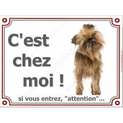 Griffon Bruxellois, Plaque portail C'est Chez Moi ! panneau affiche pancarte, attention chien