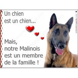 """Malinois Tête 3/4, plaque int/ext. """"Membre de la Famille"""" 16 cm LOVE"""