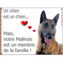 Plaque 2 Tailles LOVE Membre de la Famille, Malinois Tête 3/4