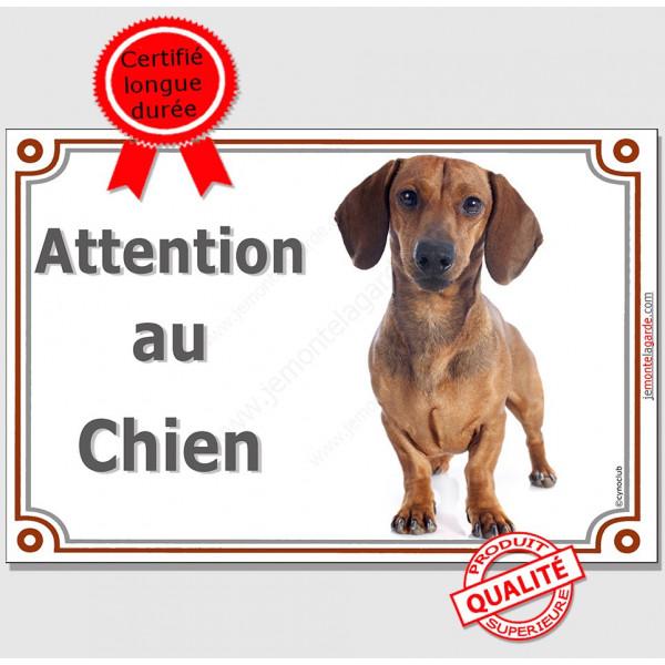 Teckel Poils Ras Fauve, Panneau portail Attention au Chien, plaque affiche pancarte photo