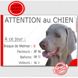 Plaque portail Nombre Voleurs, ballons, facteurs, Braque de Weimar Tête panneau pancarte drôle attention au chien