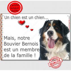 """Bouvier Bernois Tête, Plaque """"un chien est un membre de la famille"""" pancarte, affiche panneau photo"""