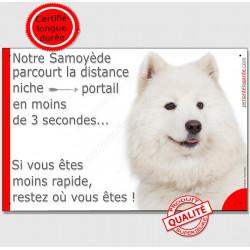 """Samoyède, Plaque humoristique """"parcourt distance niche portail 3 secondes, rapide"""" pancarte, affiche panneau photo"""