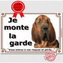 """St-Hubert tête, plaque """"Je Monte la Garde"""" 2 tailles LUX B"""