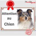 """Shetland Merle Tête, plaque """"Attention au Chien"""" 3 tailles LUX A"""