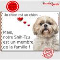 """Shih-Tzu fauve, plaque """"Membre de la Famille"""" 24 cm LOV"""