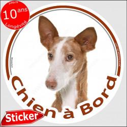 """Sticker autocollant rond """"Chien à Bord"""" 15 cm, Podenco Tête, adhésif vitre voiture photo"""