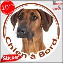 "Rhodesian Ridgeback, sticker ""Chien à Bord"" 14 cm"
