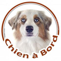 """Sticker autocollant rond """"Chien à Bord"""" 15 cm, Berger Australien Blanc et Rouge Merle Tête"""
