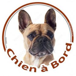 """Sticker autocollant rond """"Chien à Bord"""" 15 cm, Bouledogue Français Fauve Tête, adhésif vitre voiture Bulldog auto"""