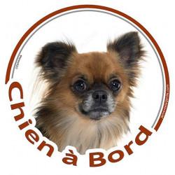 """Sticker autocollant rond """"Chien à Bord"""" 15 cm, Chihuahua fauve charbonné poils longs Tête, adhésif vitre voiture photo"""
