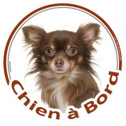 """Sticker autocollant rond """"Chien à Bord"""" 15 cm, Chihuahua chocolat marron brun poils longs Tête adhésif vitre voiture"""