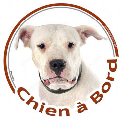 "Dogue Argentin, sticker rond ""Chien à Bord"" 15 cm"