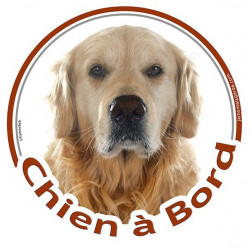 "Golden Retriever, sticker ""Chien à Bord"" 15 cm - 3 ans"