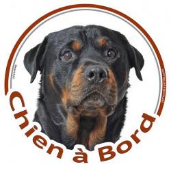 """Sticker autocollant rond """"Chien à Bord"""" 15 cm, Rottweiler Tête, adhésif vitre voiture"""