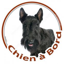 """Scottish Terrier noir, sticker autocollant rond """"Chien à Bord"""" Disque adhésif vitre voiture photo"""