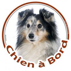 """Sticker autocollant rond """"Chien à Bord"""" 15 cm, Berger Shetland merle Tête, adhésif vitre voiture Sheltie"""