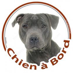 """Sticker rond """"Chien à Bord"""" 15 cm, Staffie bleu gris Tête"""