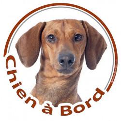 """Sticker autocollant rond """"Chien à Bord"""" 15 cm, Teckel fauve marron à poils courts ras Tête, adhésif vitre voiture"""