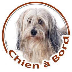 """Terrier du Tibet blanc et fauve poils longs, sticker autrocollant rond """"Chien à Bord"""" adhésif vitre voiture photo disque"""