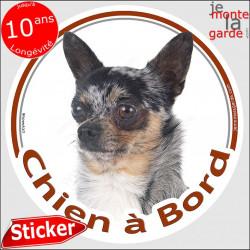 """Chihuahua merle poils courts, sticker autocollant rond """"Chien à Bord"""" adhésif photo voiture auto arlequin"""