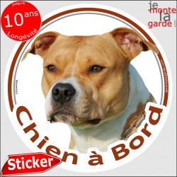 "Am-Staff fauve clair et blanc, sticker photo rond ""Chien à Bord"" american Staff sable voiture"