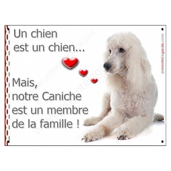 """Caniche Blanc couché, plaque """"un chien est un membre de la famille"""" pancarte, affiche panneau idée cadeau photo cadre"""