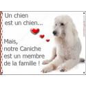 """Caniche Blanc, plaque """"Membre de la Famille"""" 16 cm LOVE"""