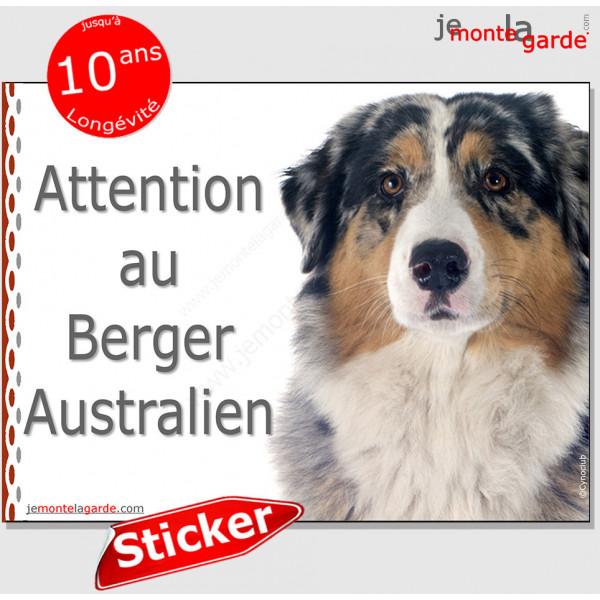 """Berger Australien bleu merle, panneau autocollant """"Attention au Chien"""" pancarte affiche photo Aussie sticker"""