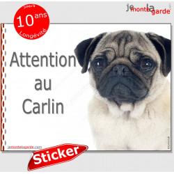 """Carlin fauve sable beige, panneau photo autocollant """"Attention au Chien"""" Pancarte sticker Pub adhésif, affiche portail boite let"""